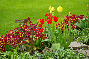 spring_main_image