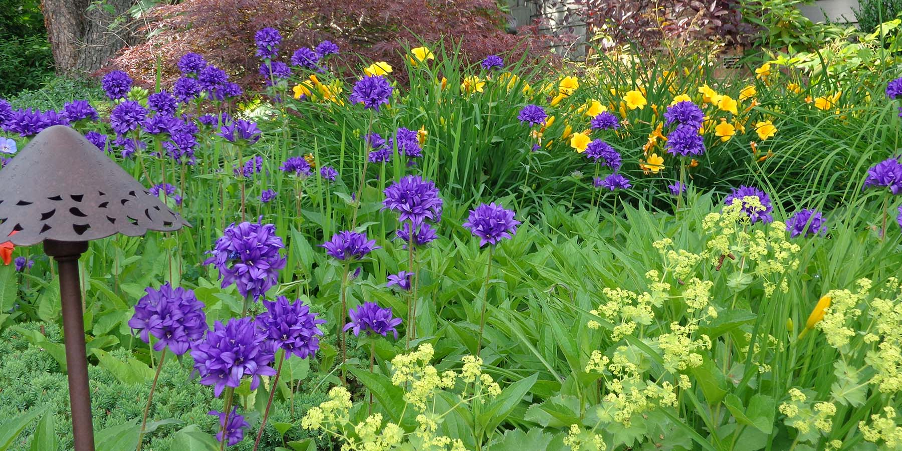 hemlock gardening