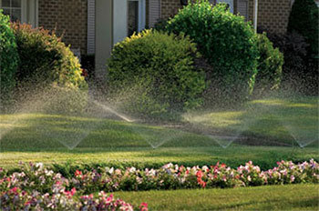 july_watering2