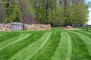 hemlock_lawn