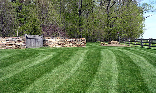 Professionally manicured lawn