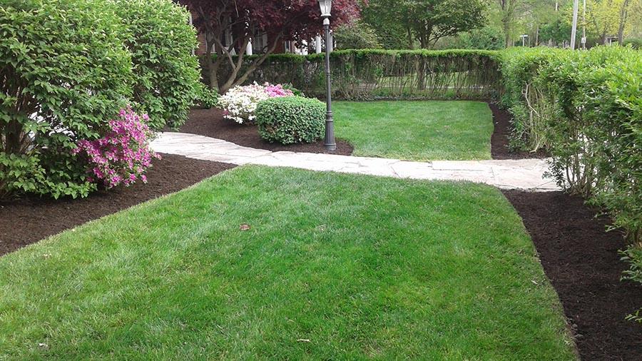 hemlock lawn care