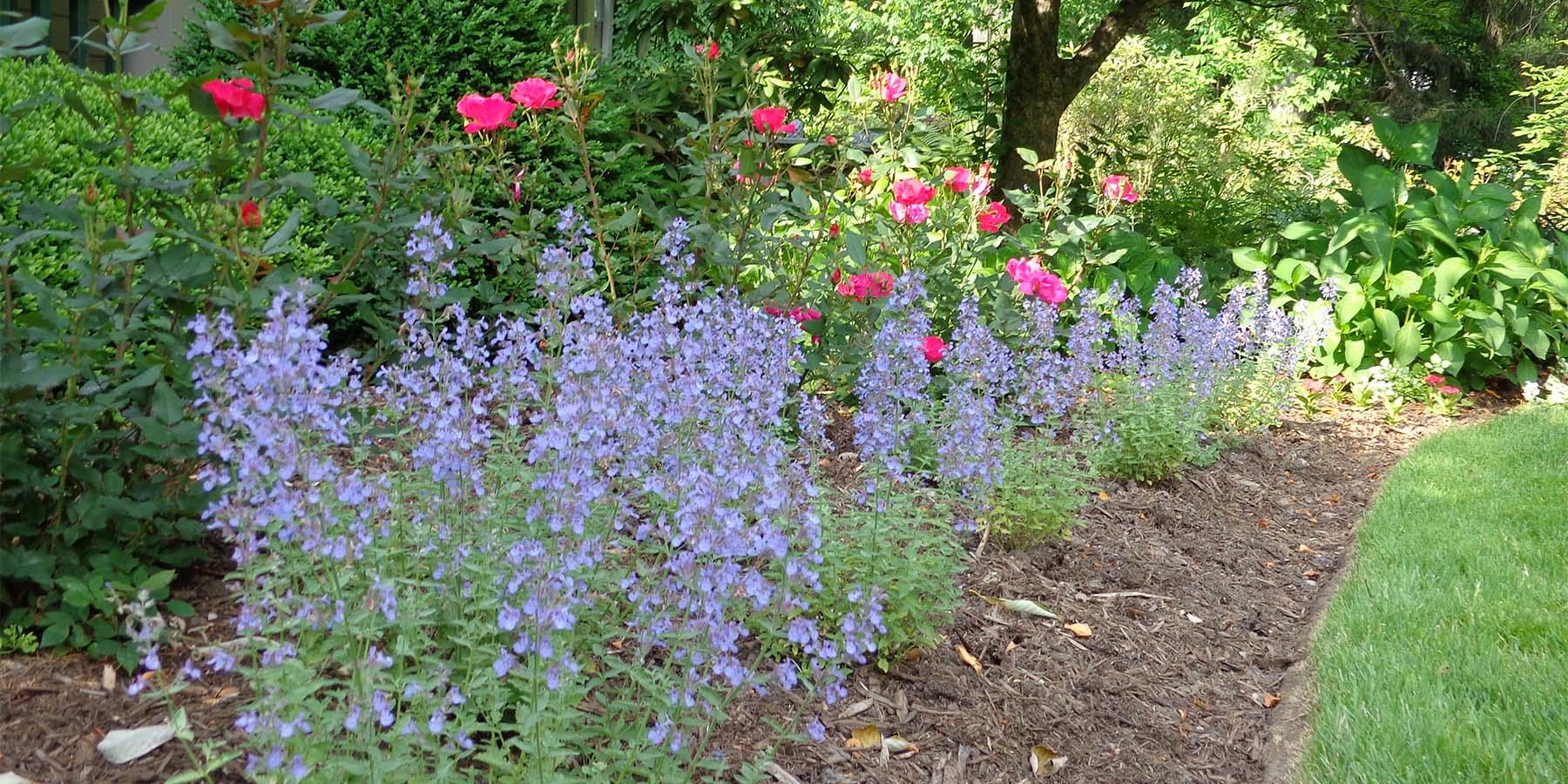 hemlock garden maintenance planting